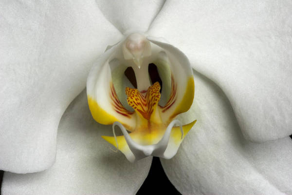 Photograph - Orchid 1 by Pierre Leclerc Photography