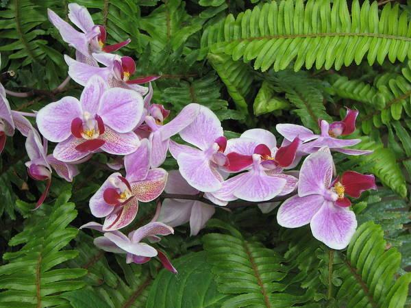 Photograph - Orchid 2 by David Dunham