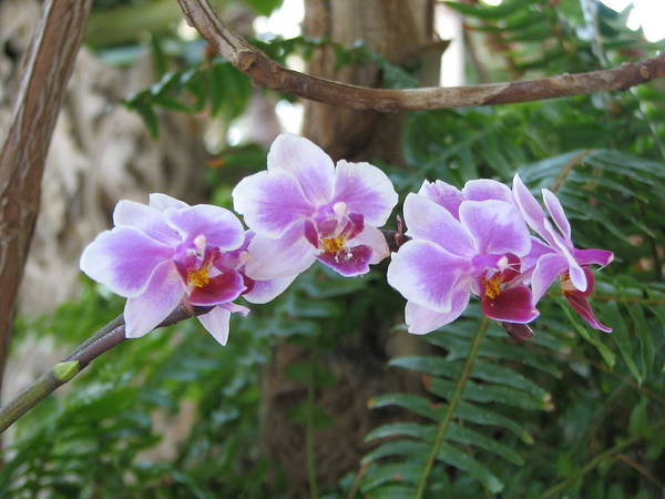 Photograph - Orchid 3 by David Dunham