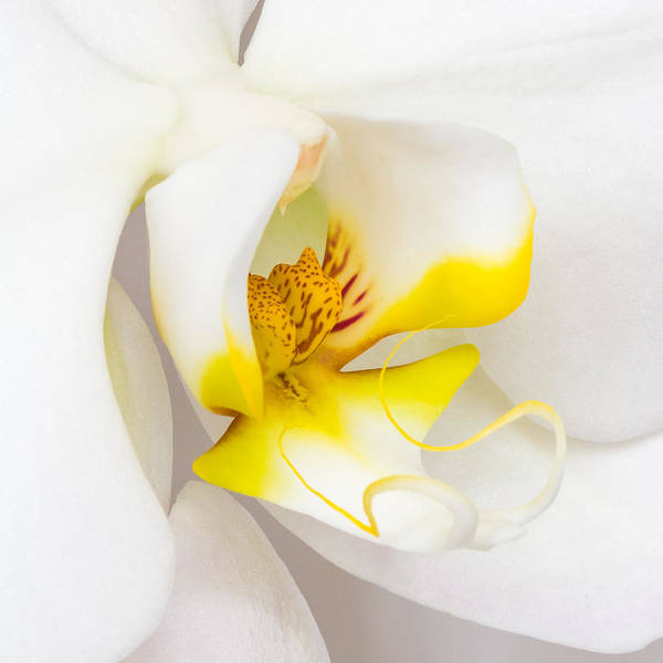 Photograph - Orchid 4 by Patricia Schaefer