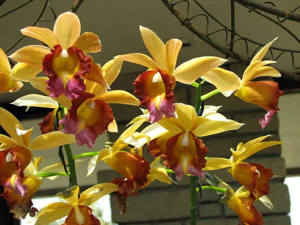 Photograph - Orchid 5 by David Dunham