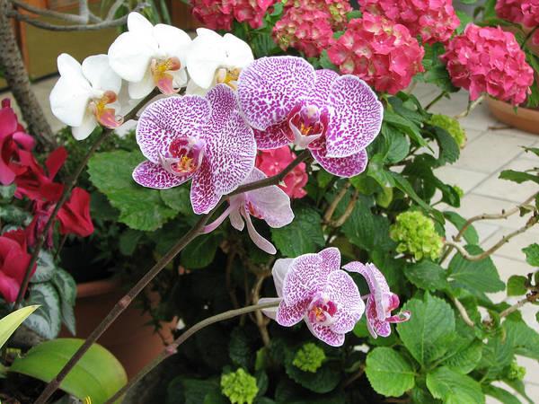 Photograph - Orchid 6 by David Dunham