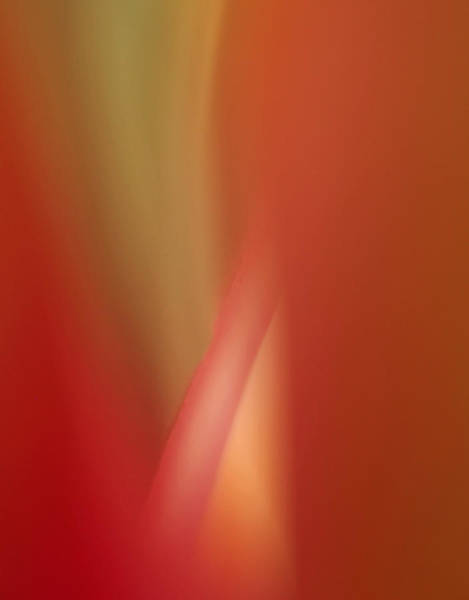 Photograph - Orchid Abstract by Bob Cournoyer