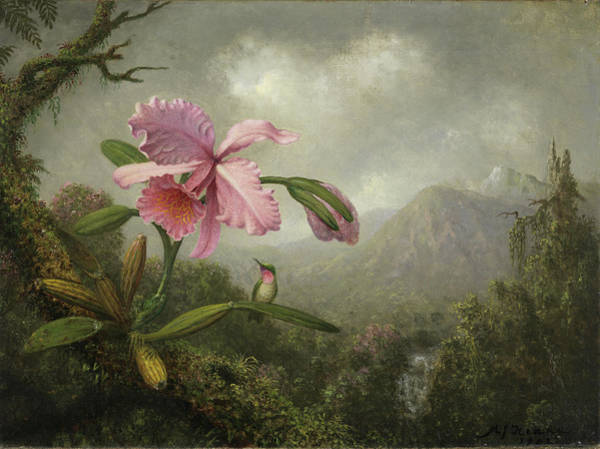 Humming Bird Wall Art - Painting - Orchid And Hummingbird Near A Waterfall by Martin Johnson Heade