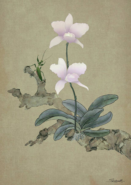 Wall Art - Digital Art - Orchid And The Mantis by M Spadecaller