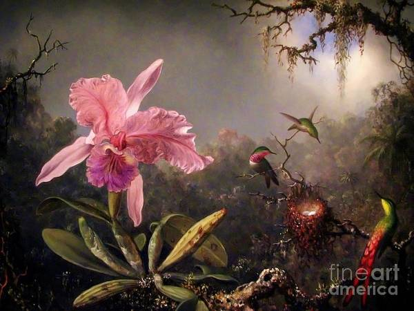 Wall Art - Painting - Orchid And Three Brazilian Hummingbirds by Pg Reproductions