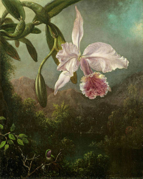 Wall Art - Painting - Orchid Blossoms by Martin Johnson Heade