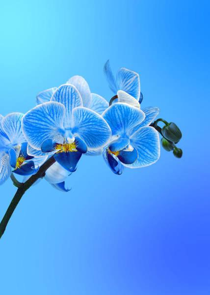 Wall Art - Photograph - Orchid Blue by Mark Rogan