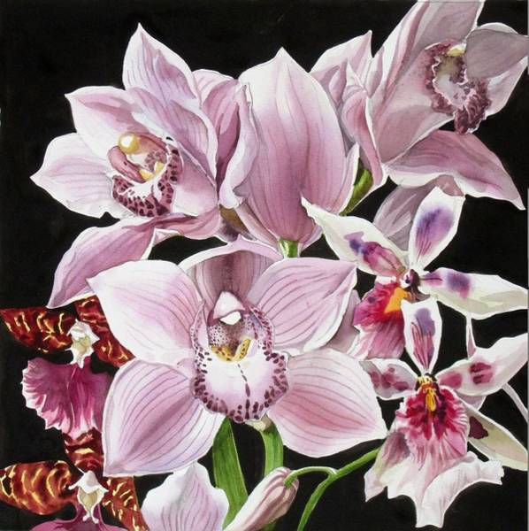 Painting - Orchid Bouquet by Alfred Ng