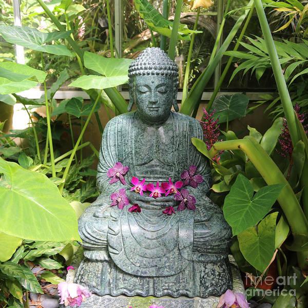 Photograph - Orchid Buddha by Carol Groenen