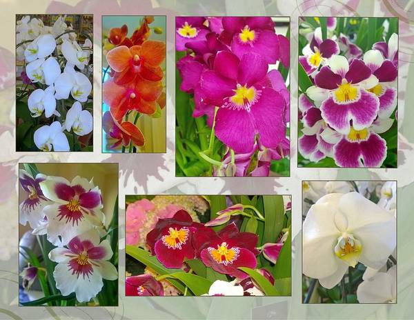 Wall Art - Photograph - Orchid Collage by Gayle Miller