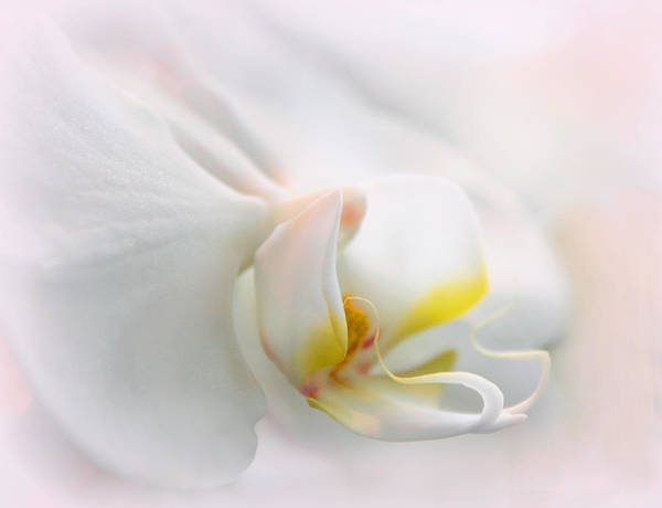 Photograph - Orchid Curves by Jessica Jenney