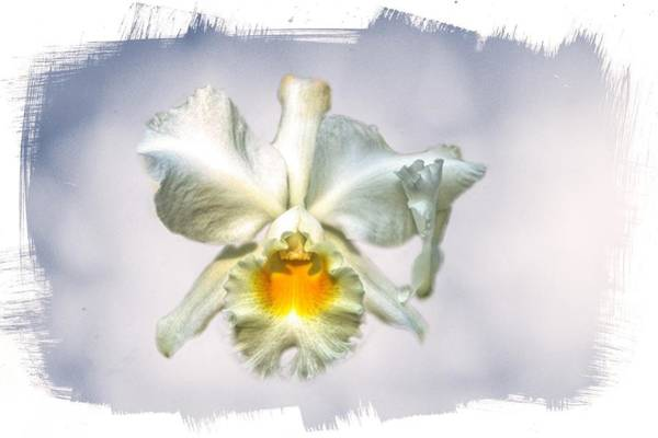 Wall Art - Photograph - Orchid Encounter by Ches Black