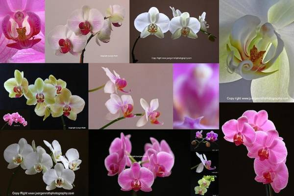 Photograph - Orchid Fine Art Flower Photography by Juergen Roth