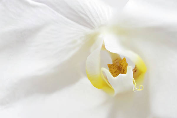 Photograph - Orchid Flower Close Up by Paul Cowan