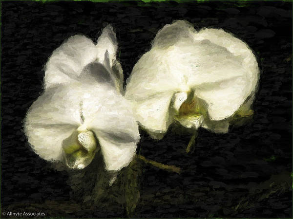 Chs Digital Art - Orchid In White by Ches Black