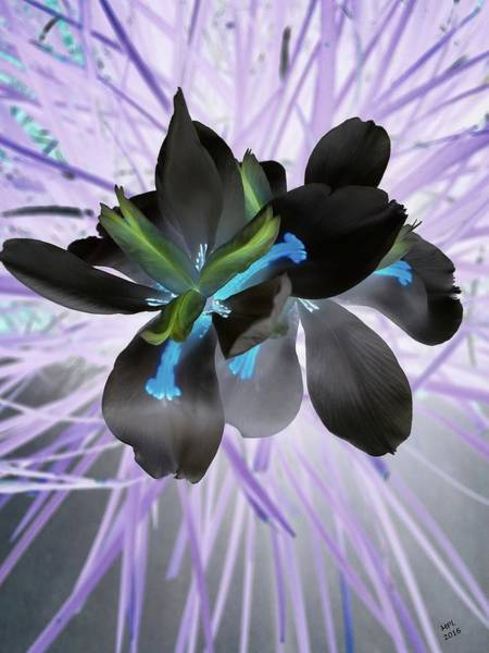 Photograph - Orchid Inverted by Marian Palucci-Lonzetta
