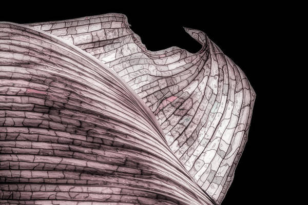 Wall Art - Photograph - Orchid Leaf Macro by Tom Mc Nemar