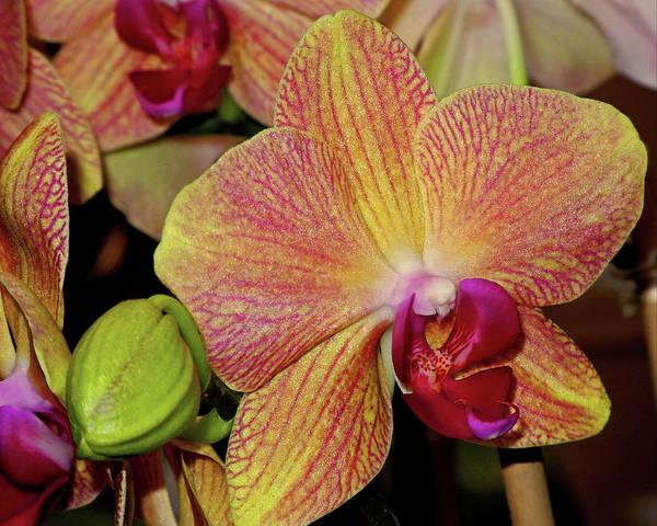 Photograph - Orchid by Lynda Lehmann