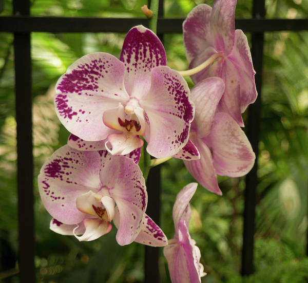 Photograph - Orchid by Michael Colgate