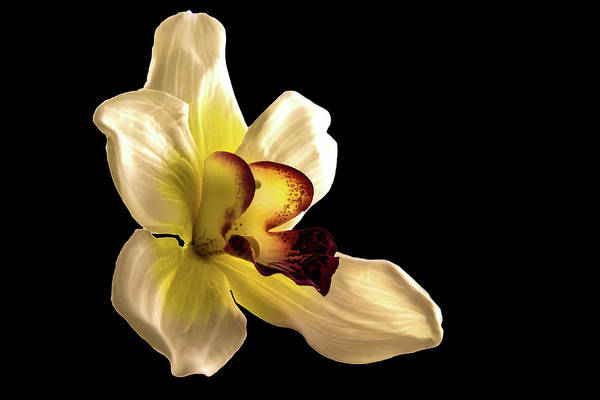 Photograph - Orchid by Mike Stephens