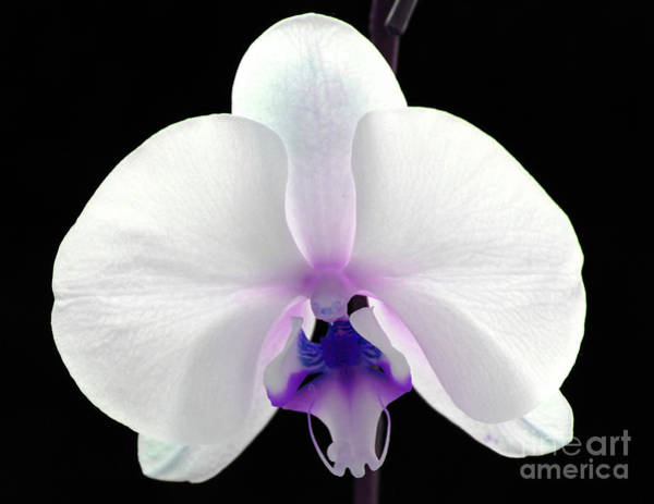 Sophisticated Photograph - Orchid Of Grace by Krissy Katsimbras
