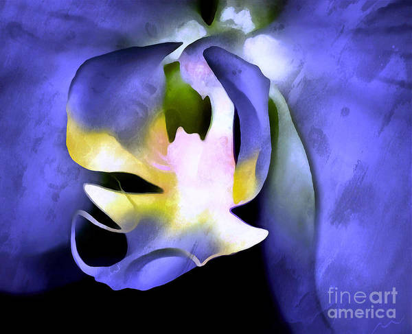 Sophisticated Photograph - Orchid Of Life by Krissy Katsimbras