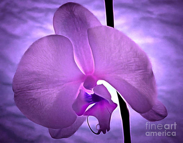Sophisticated Photograph - Orchid Of Serenity by Krissy Katsimbras