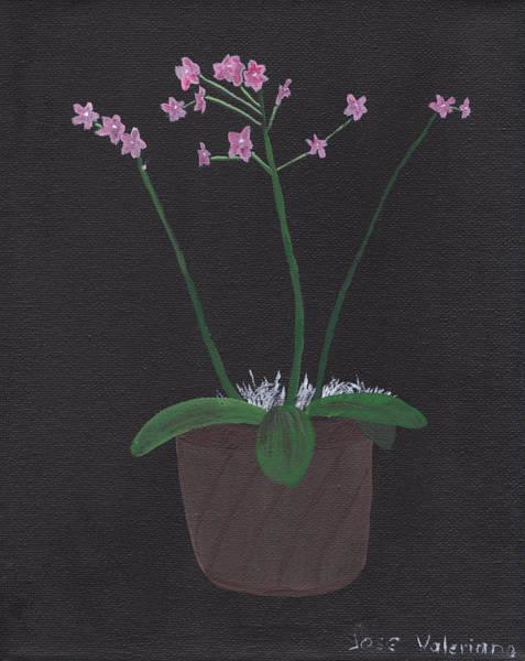Orchid-phalaeropsis Hybrid Art Print