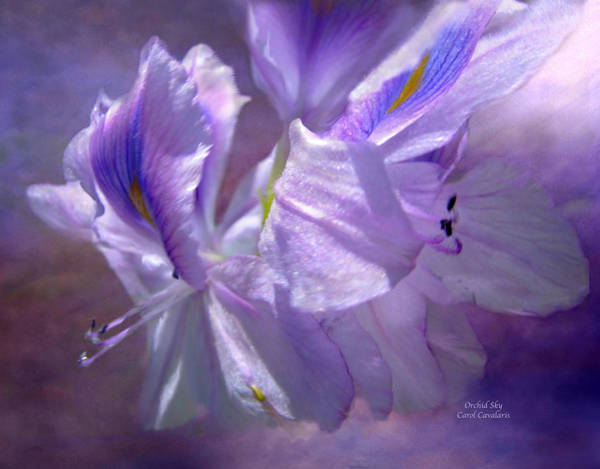Orchid Mixed Media - Orchid Sky by Carol Cavalaris