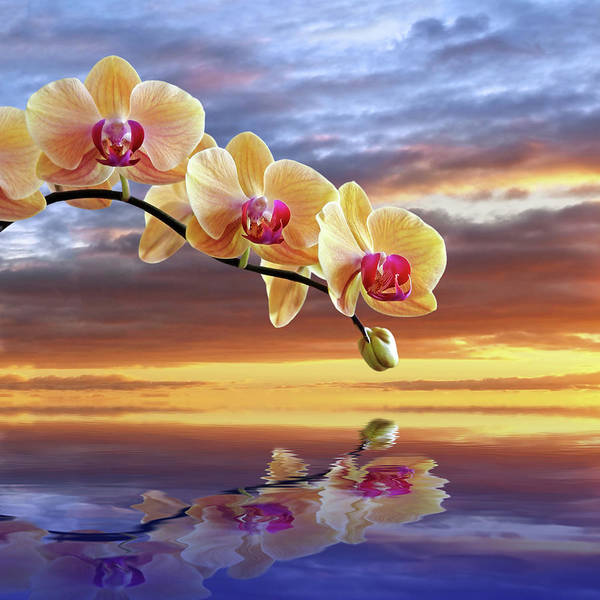 Photograph - Orchid Sunset Reflections by Gill Billington