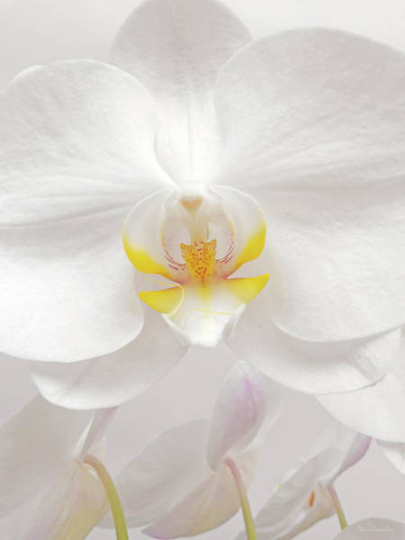 Wall Art - Photograph - Orchid by Wim Lanclus