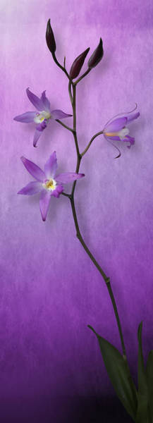 Wall Art - Photograph - Orchid Window by Cesar Palomino