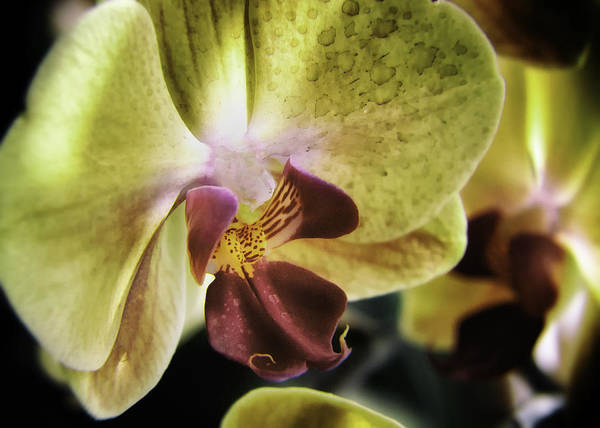 Photograph - Orchid With A Tongue by Barry Weiss