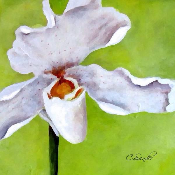 Beach Grass Drawing - Orchidee Art White by Carmen Sander