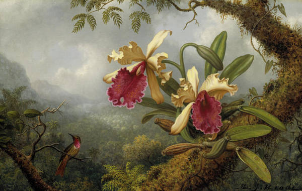 Humming Bird Wall Art - Painting - Orchids And Hummingbird by Martin Johnson Heade