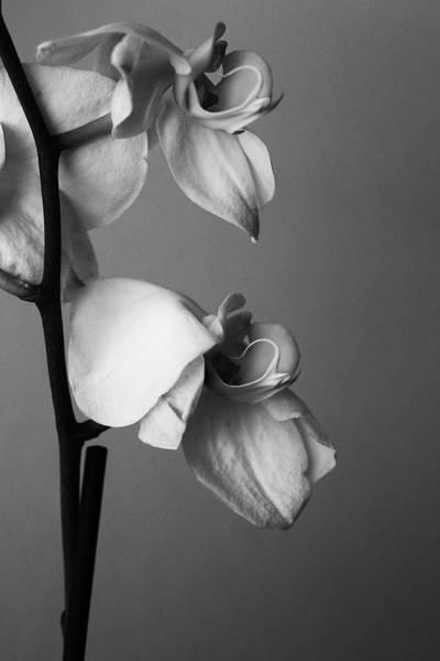 Orchids - April 2009 Art Print
