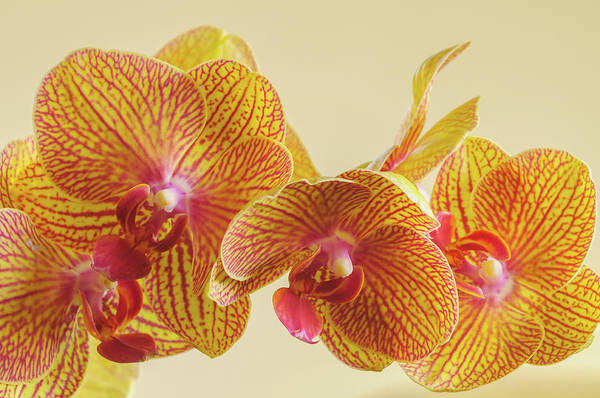 Photograph - Orchids by Bob Grabowski
