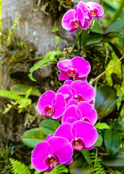 Photograph - Orchids by Daniel Marcion