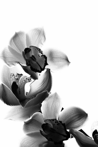 Photograph - Orchids by Fine Arts