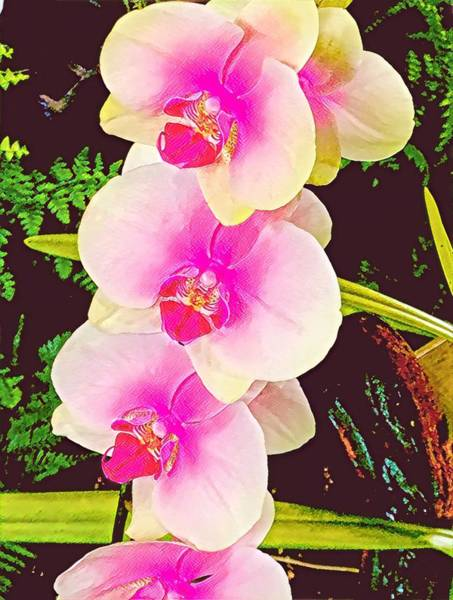Photograph - Orchids In Pink Aloha by Joalene Young