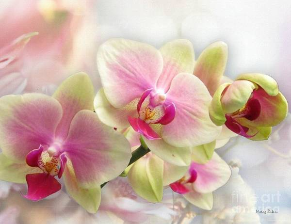 Photograph - Orchids by Morag Bates