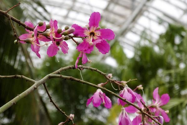 Coffee Mug Photograph - Orchids Myriad Botanical Gardens Okc by Toni Hopper
