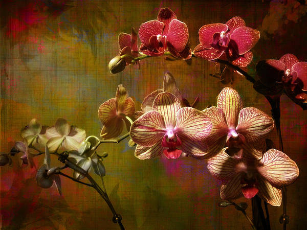 Orchids On Silk Art Print