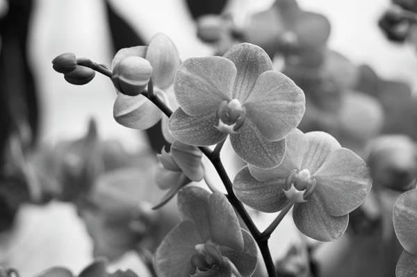 Wall Art - Photograph - Orchids by Samantha Eisenhauer