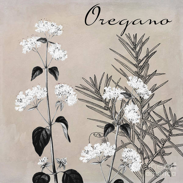 Wall Art - Painting - Oregano Flowering Herb by Mindy Sommers