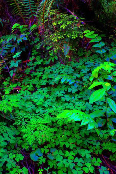 Photograph - Oregon #8 Cosmically Enhanced by Ben Upham III