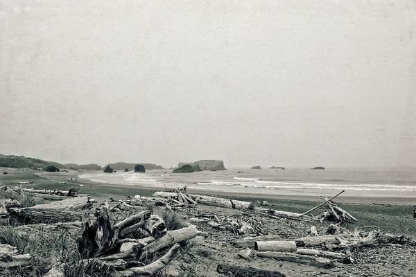 Photograph - Oregon Beach With Driftwood by Michelle Calkins