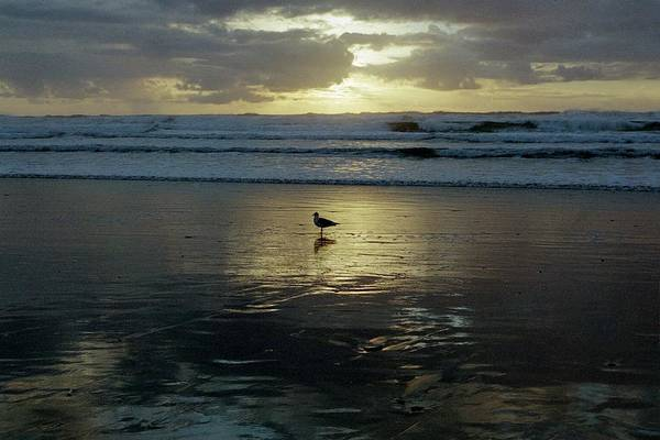 Photograph - Oregon Coast 3 by Deahn      Benware