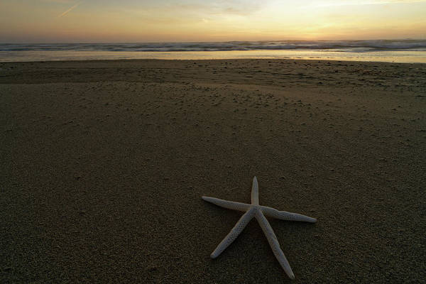 Photograph - Oregon Coast Sunset by Jonathan Davison